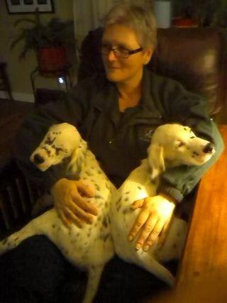 Pups at 12 weeks